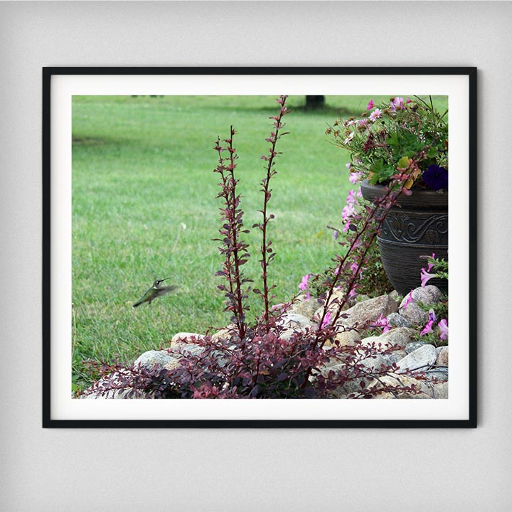 garden-wild-bird-photograpy-decor