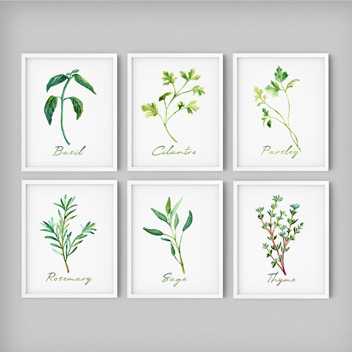 gifts-for-chefs-herbs-spices-wall-art-botanicals