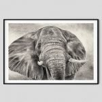 pencil-drawing-home-decor-elephant