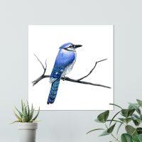 blue-jay-bird-canvas-wall-art